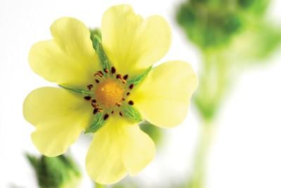 Koncentrovaná vůně Spring Air Ultra Scent - WILD FLOWER (500ml)